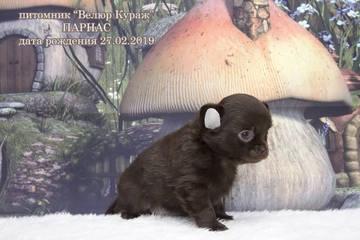 http://sh.uploads.ru/t/EywH7.jpg