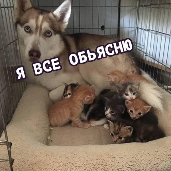http://sh.uploads.ru/t/FBu3c.jpg