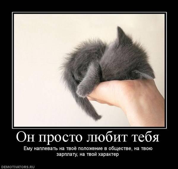 http://sh.uploads.ru/t/FH4dp.jpg