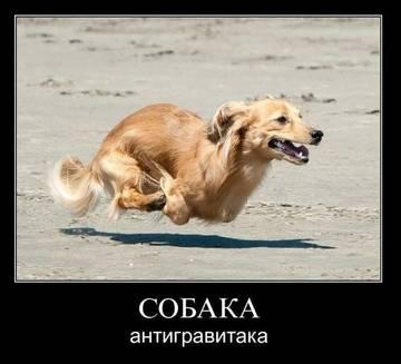 http://sh.uploads.ru/t/FM3Ti.jpg