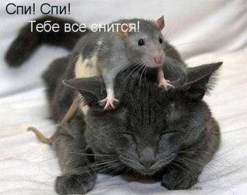 http://sh.uploads.ru/t/FtDWb.jpg