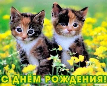 http://sh.uploads.ru/t/FwAK4.jpg