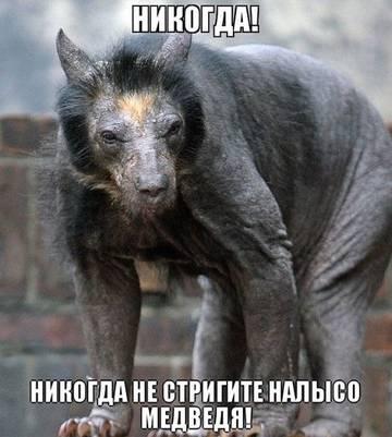 http://sh.uploads.ru/t/G6FvP.jpg