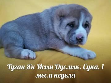 http://sh.uploads.ru/t/GRl0T.jpg