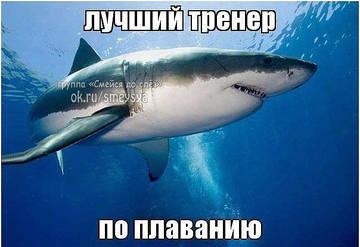 http://sh.uploads.ru/t/Gdr2N.jpg