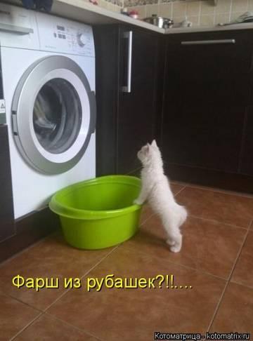 http://sh.uploads.ru/t/HnDmI.jpg