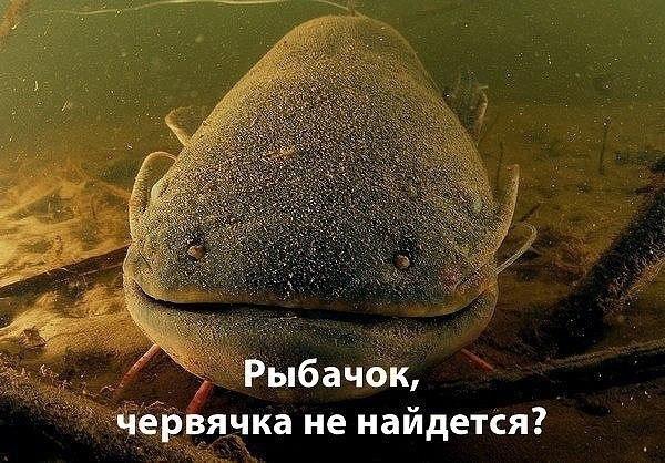 http://sh.uploads.ru/t/Hw2je.jpg