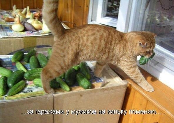http://sh.uploads.ru/t/IR04o.jpg