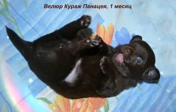 http://sh.uploads.ru/t/ISzJ9.jpg