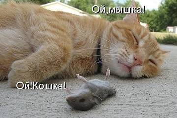 http://sh.uploads.ru/t/Iugk3.jpg