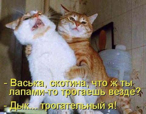 http://sh.uploads.ru/t/J0U3e.jpg