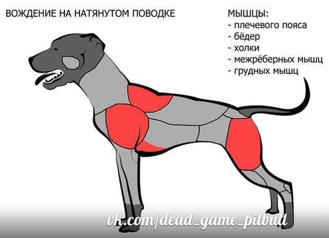 http://sh.uploads.ru/t/JIf8n.jpg