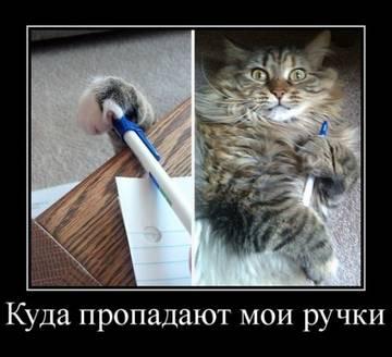 http://sh.uploads.ru/t/JXoiw.jpg