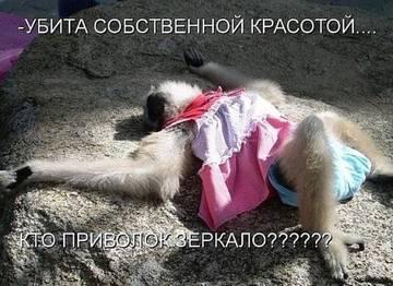 http://sh.uploads.ru/t/Jg3ut.jpg