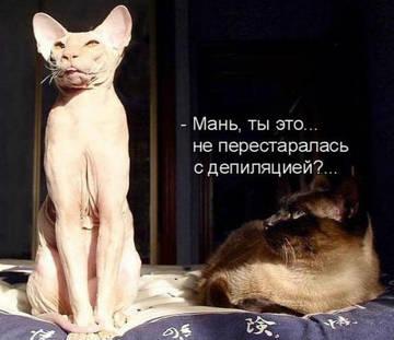 http://sh.uploads.ru/t/JvXrt.jpg