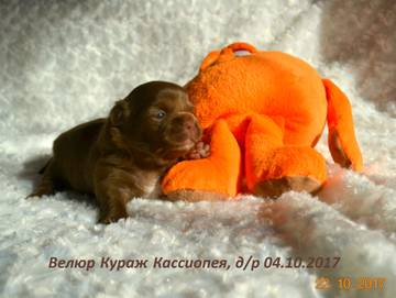 http://sh.uploads.ru/t/K0Pej.jpg