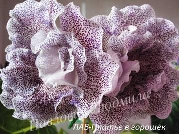 http://sh.uploads.ru/t/KOySt.jpg