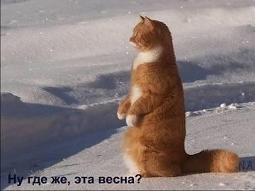 http://sh.uploads.ru/t/L1fSl.jpg