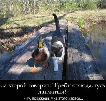 http://sh.uploads.ru/t/LnVAf.jpg
