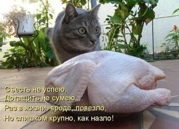 http://sh.uploads.ru/t/MZp6j.jpg