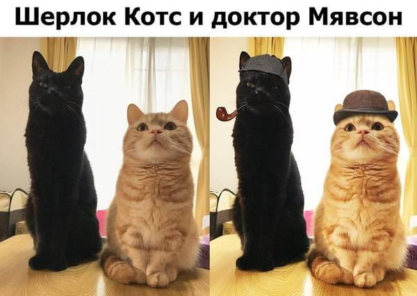 http://sh.uploads.ru/t/MfKOg.jpg