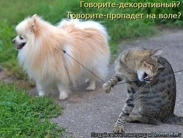 http://sh.uploads.ru/t/NG7yq.jpg
