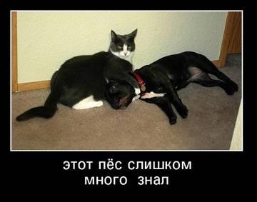 http://sh.uploads.ru/t/NJLnI.jpg