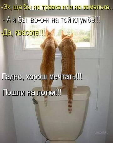 http://sh.uploads.ru/t/NRqTe.jpg