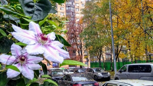 http://sh.uploads.ru/t/O9jCw.jpg