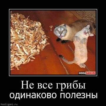 http://sh.uploads.ru/t/OZJdw.jpg