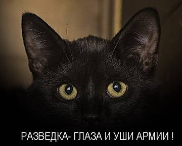 http://sh.uploads.ru/t/P1iop.jpg
