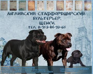 http://sh.uploads.ru/t/P1vTJ.jpg