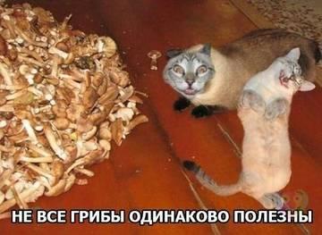 http://sh.uploads.ru/t/PgNtE.jpg