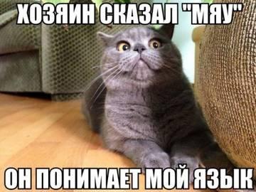 http://sh.uploads.ru/t/PqQSR.jpg