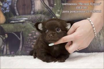 http://sh.uploads.ru/t/PqfBl.jpg