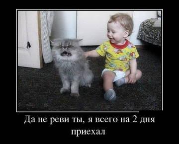 http://sh.uploads.ru/t/PwgoS.jpg