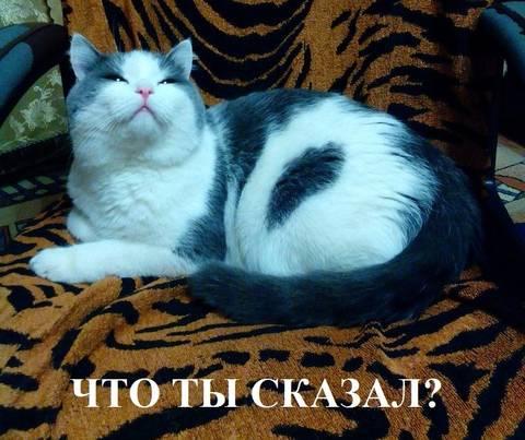 http://sh.uploads.ru/t/QsmVH.jpg