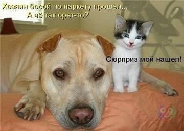 http://sh.uploads.ru/t/R1o0h.jpg