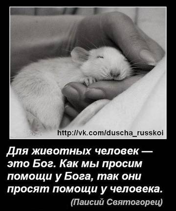 http://sh.uploads.ru/t/RCotZ.jpg