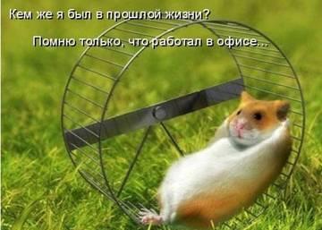 http://sh.uploads.ru/t/Rr5Oi.jpg