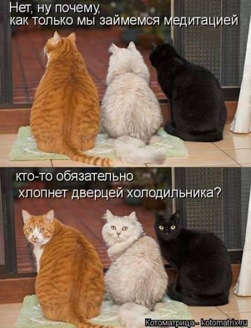 http://sh.uploads.ru/t/SE0xi.jpg