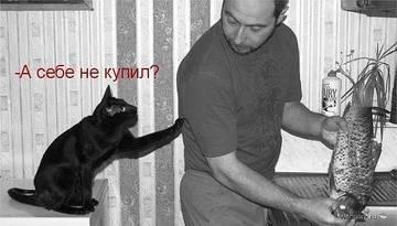 http://sh.uploads.ru/t/SPEki.jpg