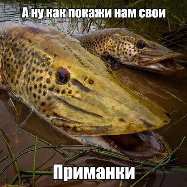 http://sh.uploads.ru/t/TPViH.jpg
