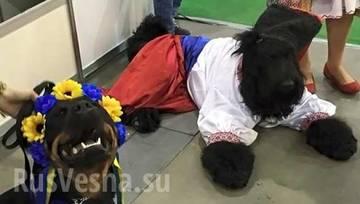 http://sh.uploads.ru/t/VHEjJ.jpg