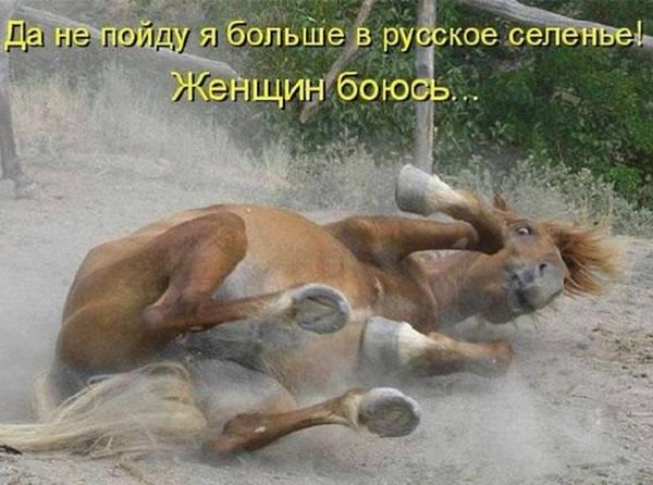 http://sh.uploads.ru/t/W1SK6.jpg