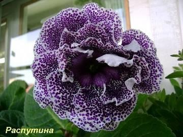 http://sh.uploads.ru/t/WMwk2.jpg