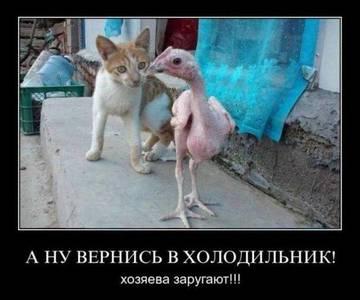 http://sh.uploads.ru/t/WS9GY.jpg
