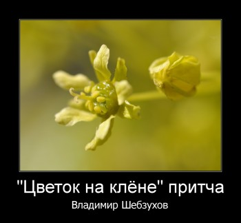 http://sh.uploads.ru/t/Wgd5j.jpg