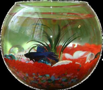 Йифф-аквариум