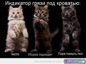 http://sh.uploads.ru/t/X0tI2.jpg